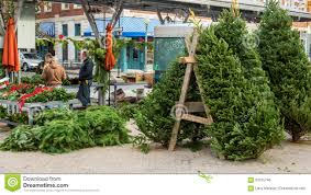 eastern market christmas trees part 21 the detroit lions are