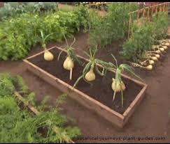 vegetables to plant in a raised garden bed best idea garden