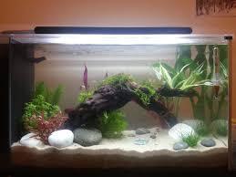 Wohnzimmertisch Aquarium A Planted Fluval Spec V One Of The Tanks We U0027re Considering