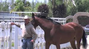 How To Tell If A Horse Is Blind My Horse Loves Me Or Does He Youtube