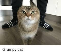 Grumpy Cat Snow Meme - goddamn snow i got important cat shit to do grumpy cat meme on me me