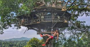 three house 10 most tree house hotels in the