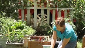 how to plant watermelons in a container garden space youtube