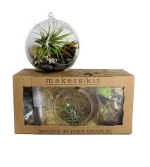 hanging air plant terrarium kit plants desk uk diy australia lamp