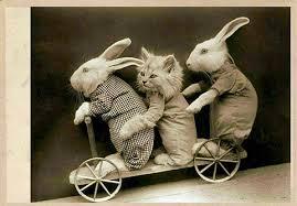 vintage rabbit cat pictures archive page 3 project 1999