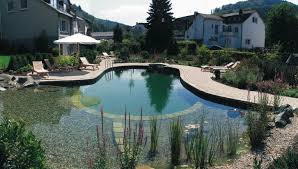 natural swimming pool design pools for home