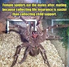 Cute Spider Memes - funny spider meme picture imglulz