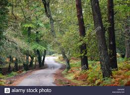 bolderwood arboretum ornamental drive autumn new forest national