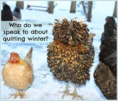 the chicken 10 winter chicken care mistakes to avoid