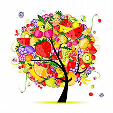 the color creative fruit trees vector color creative fruit tree