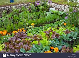 a mixed vegetable garden enclosed by a wall made from sheep wool