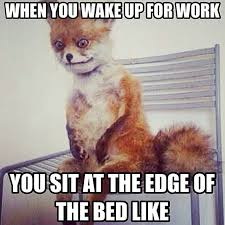 Stoned Fox Meme - memes of fox of best of the funny meme