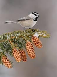 Backyard Birds Utah 144 Best Utah Birding Images On Pinterest Utah Animals And