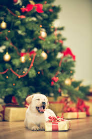 149 best holiday pets u0026 gift guide images on pinterest holiday