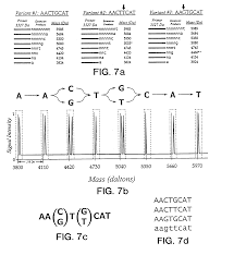 patent us20040077004 use of nucleotide analogs in the analysis