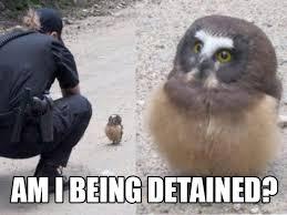Owl Memes - owl memes