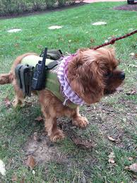 teddy u0027s halloween costume call of duty ghost dog military