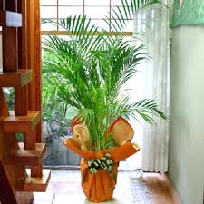 home decor with plants indoor home decor indoor home decorations ideas liwenyun me