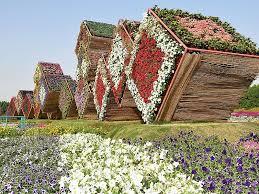dubai miracle garden in arabian peninsula uae sygic travel