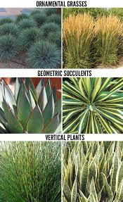 this week we continue our series on drought tolerant plants for