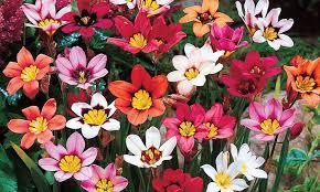 300 summer flowering bulbs groupon goods