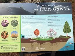 planting the seeds of innovation native plants gardening app resource library 12 000 rain gardens