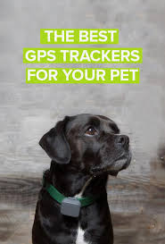 59 best whistle images on pinterest activity monitor dog