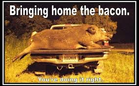 Hog Hunting Memes - outdoor channel s facebook memes outdoor channel