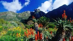 Kirstenbosch Botanical Gardens Kirstenbosch National Botanical Garden In Cape Town South Africa