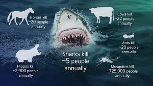Shark Attack Meme - cows kill more people than sharks
