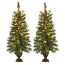 potted christmas tree potted christmas trees you ll wayfair
