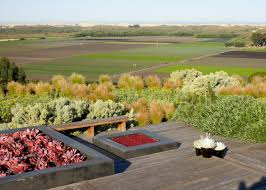landscaping with native plants photos jeffrey gordon smith landscape hgtv