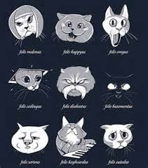 Internet Meme Cat - internet cat memes funny funny internet meme cats tridanim