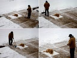 Shoveling Snow Meme - search results for tag shoveling