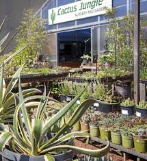 Marin Art And Garden Center Cactus Jungle Opening Nursery In Marin Cactus Jungle