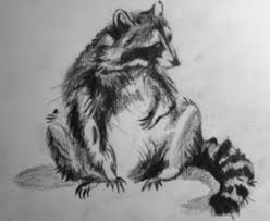 a raccoon drawing skeletal shrapnel 2017 aug 10 2012