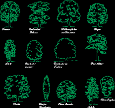 trees elevation in trees and plants kamocad