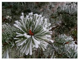 smart exchange usa winter frosted pine tree