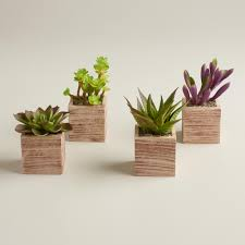 mini succulent pots set of 4 pot sets flats and carriage house
