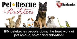 australian shepherd san diego the pet matchmaker becky rice aussie rescue san diego pet rescue