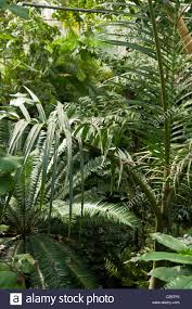 dense jungle foliage in an indoor rainforest in the tropical
