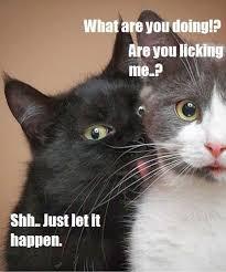 Cat Suit Meme - best 25 cat in suit meme testing testing