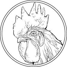 gamecock coloring pages s head stock photos royalty free s head images and pictures