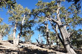 Define Tree A Forest By Any Other Name Semantics Carbon Implications And