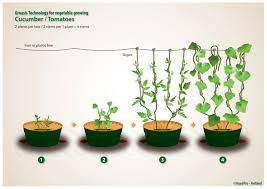 growing vegetables in a healthy sustainable way planting