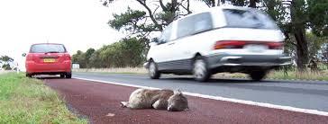 threats koala australian koala foundation
