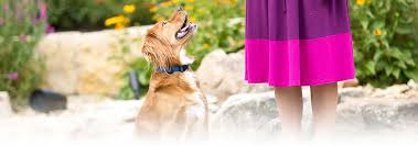 homemade dog treats recipe for healthy dogs hill u0027s pet