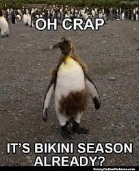Funny Penguin Memes - penguin bikini