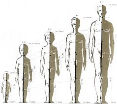 3d Human Anatomy Luxury Human Figure Anatomy 25 For Your 3d Human Anatomy With