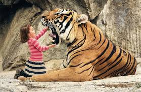 interpretation of a in which you saw tiger